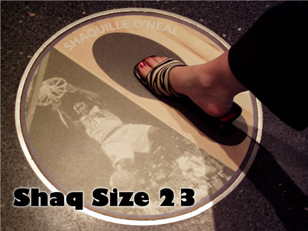 Shacks Shoe Size In Inches